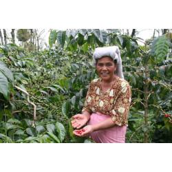 Кофе из Индонезии - обзор основных сортов