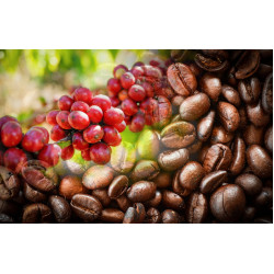 Основные способы обработки кофейных зерен